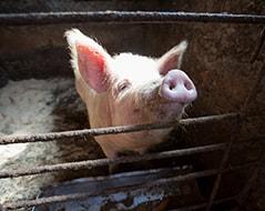 Bioferm - подстилки для животных